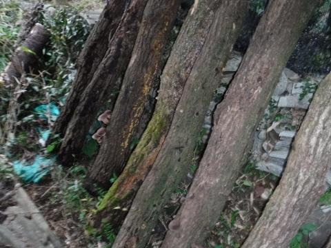 2016,12,29椎茸5