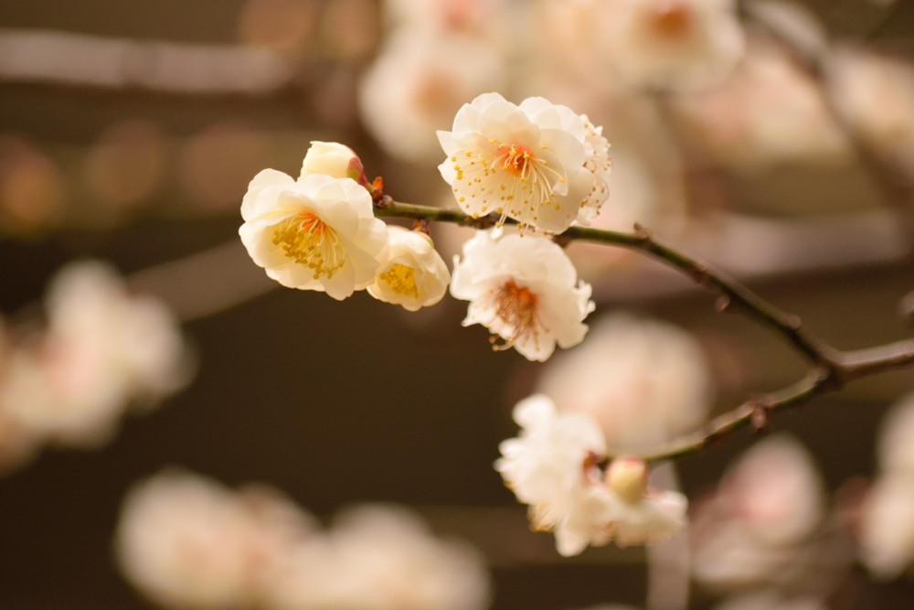 豊国神社DSC_3259