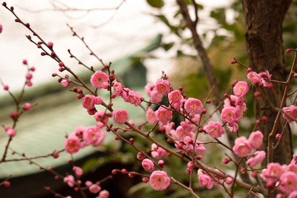 豊国神社DSC_3260