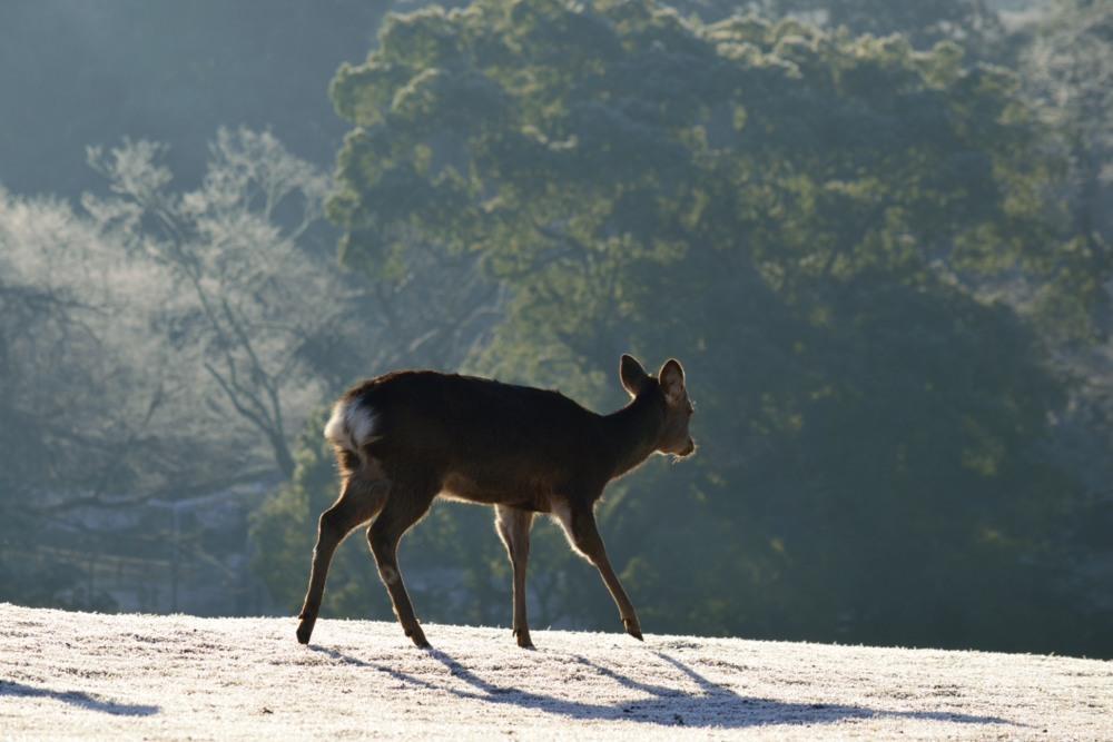 鹿背景DSC_4082