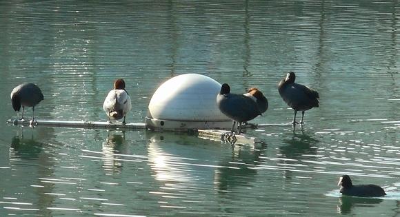 公園池-2