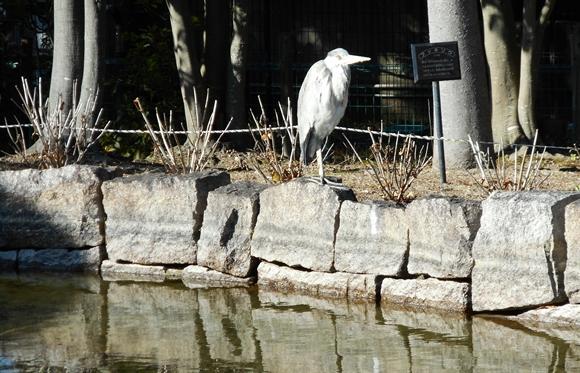 公園池-7