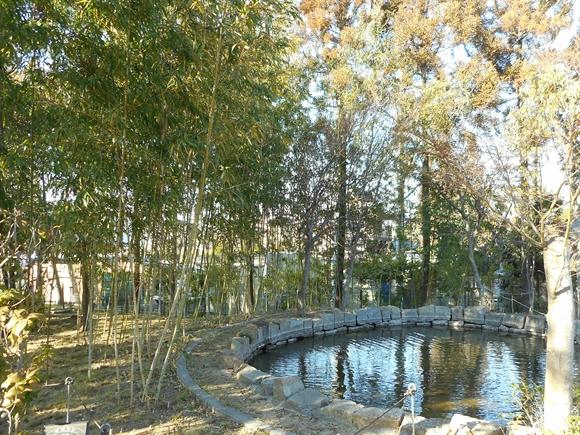 公園池-8