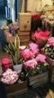 大井町花や