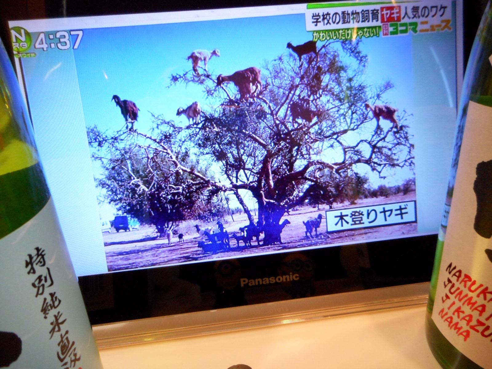 rokumaru_taka_naruka_harukasumi2.jpg