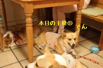 11IMG_2278.jpg