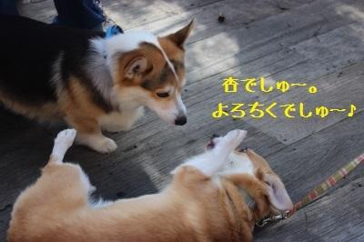 6IMG_2926.jpg