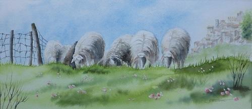 迫ってくる羊