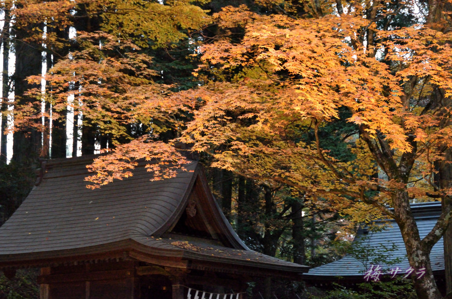 三峰神社11変更済