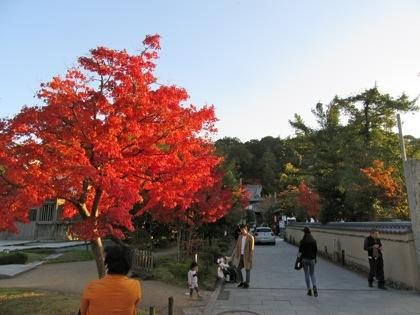 お寺の門の付近の紅葉
