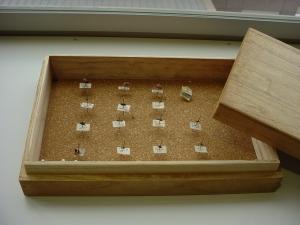 豊中市教育センター所蔵 手塚治虫採集の昆虫標本1