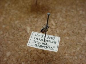 豊中市教育センター所蔵 手塚治虫採集の昆虫標本2