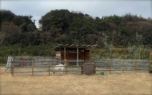 yagi170121-12