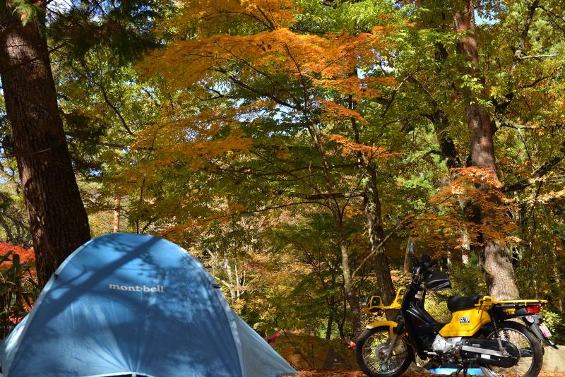 道志の森紅葉キャンプD800 003