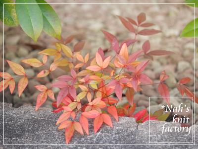 garden2017-01.jpg