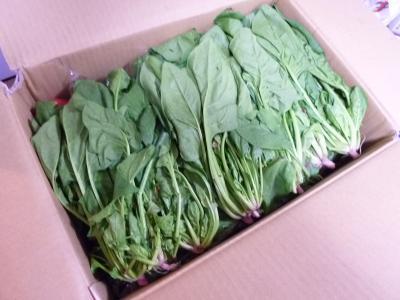 2016.10.31野菜1