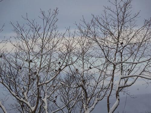 雪のあとは・・・ぬくぬく3