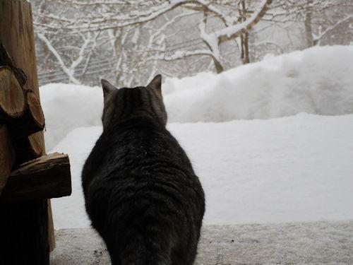 朝lから粉雪3