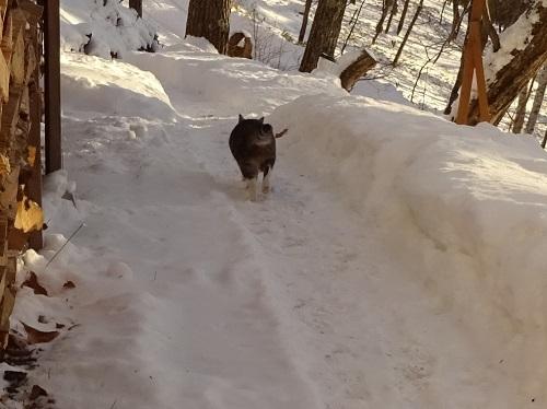 ふわふわの雪2