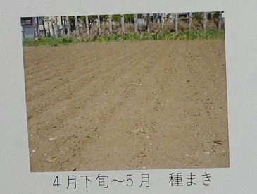DSC04874 - コピー (3)