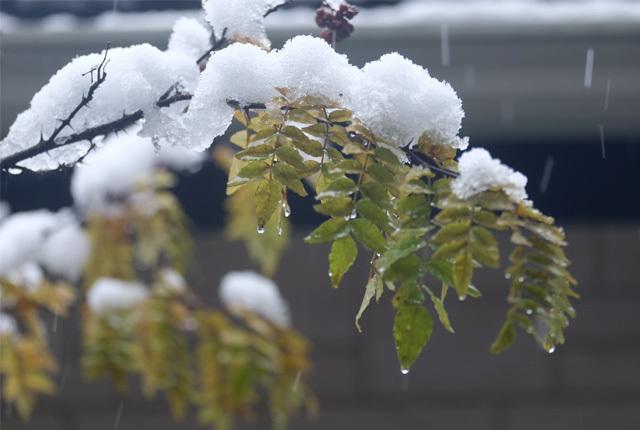 7193 11月の積雪 640×430
