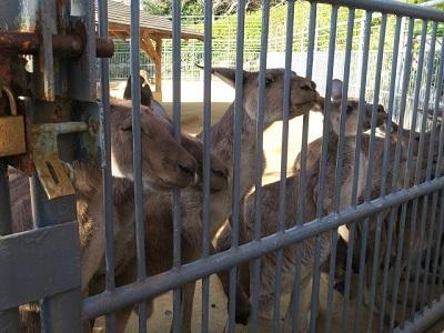 161204b_浜松市動物園2
