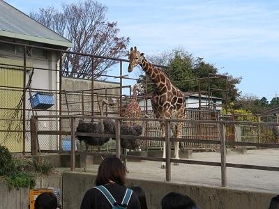161204b_浜松市動物園15