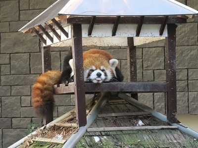 161204b_浜松市動物園19