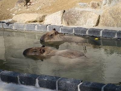 161204b_浜松市動物園21