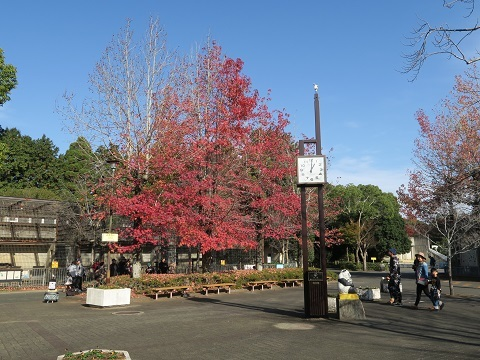 161204b_浜松市動物園23