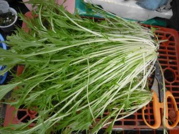 1-9サラダ水菜