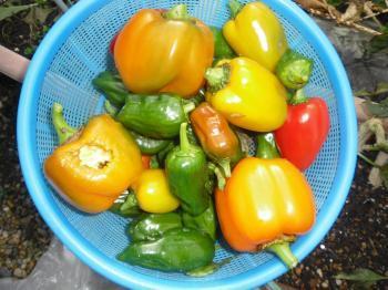 1-9収穫