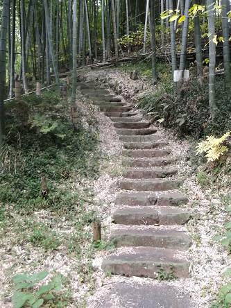 kmnd114竹林2