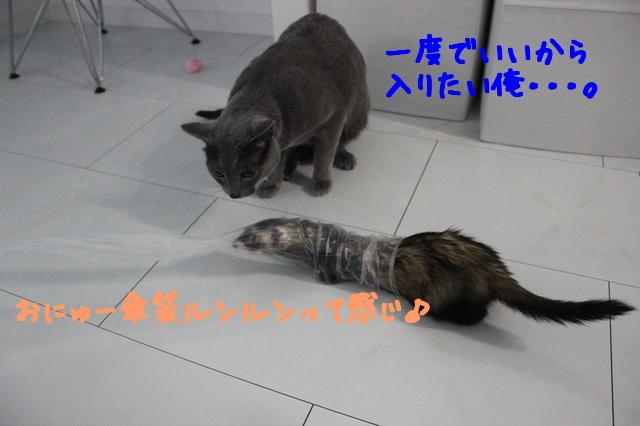 Onq699Sr_0rxMMV1480638476_1480638607.jpg