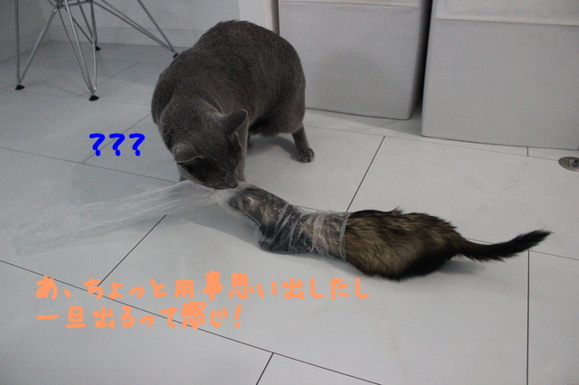 UaTTRug5dDVw2Dx1480638657_1480638745.jpg