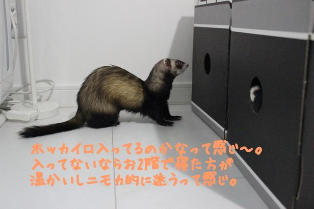 YDcSo31GvnnU9Tk1480200772_1480200863.jpg