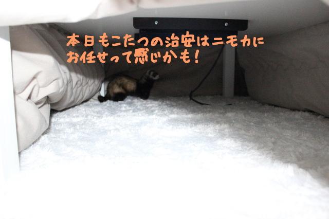 xuzvYyt1prPjuvL1483141830_1483141947.jpg