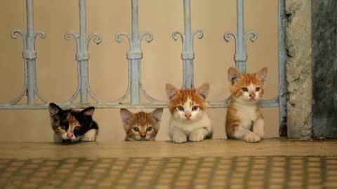 14---Yellows-Kitten-in-KEDI