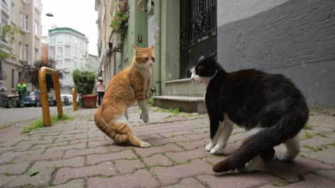 8---Gamsiz-Fight-in-KEDI