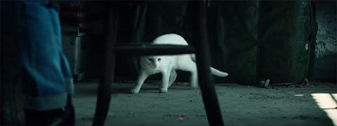 GhostReconCat5