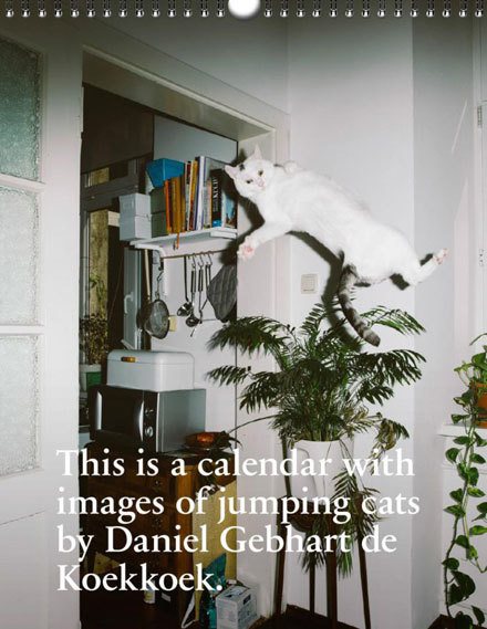Katzenkalender2017