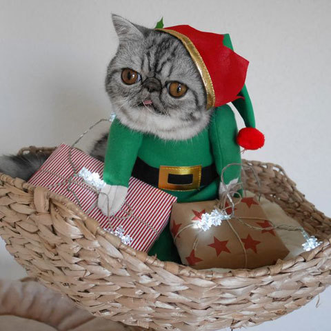 Santas-Little-Helper-Herman-The-Scaredy-Cats-First-Christmas-1