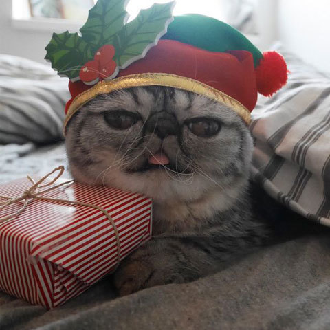 Santas-Little-Helper-Herman-The-Scaredy-Cats-First-Christmas-3