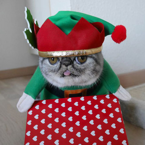Santas-Little-Helper-Herman-The-Scaredy-Cats-First-Christmas