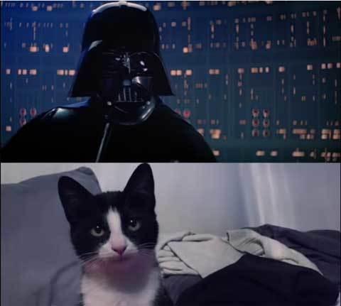Vader-Lukescenecat