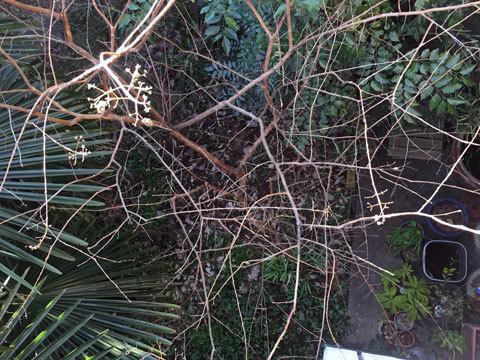garden_010817