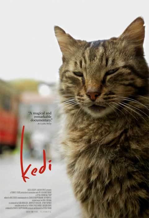 kedi-onesheet-1213