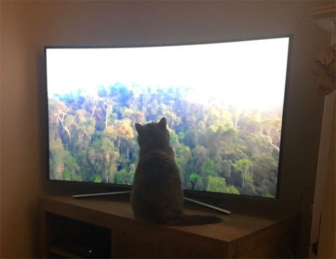 planetearth2cat
