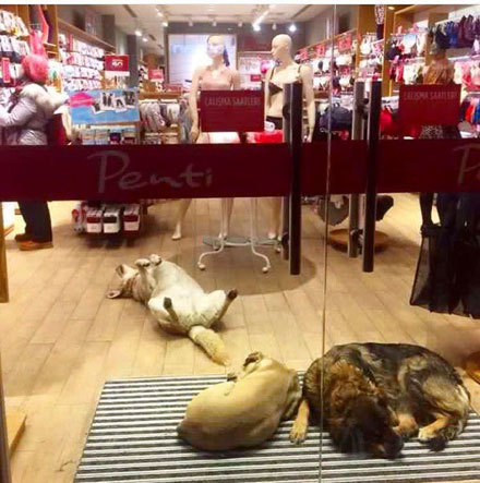 shops-help-stray-animals-istanbul-8-1