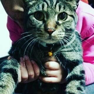 捕らえられた猫